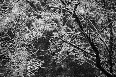 BRANCHES NEIGE